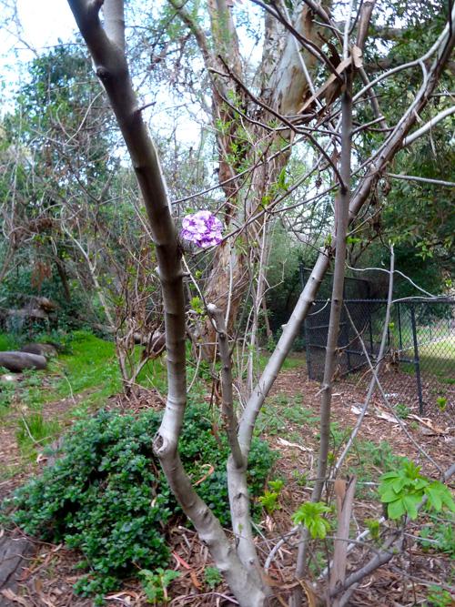 Yarn bomb flower in Elysian Park, LA